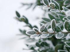精彩的冬季植物